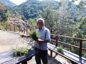 preparazione Nepitella Calabria
