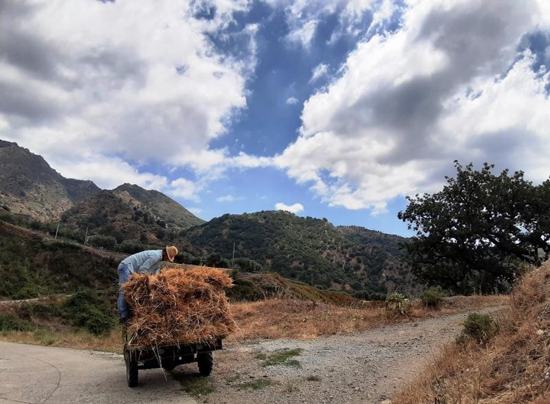 trasporto grano con trattore