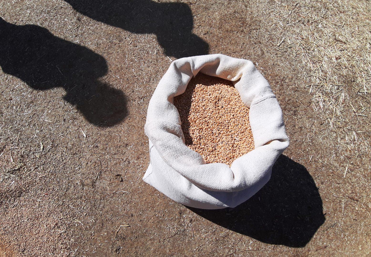 sacco di grano nell'aia