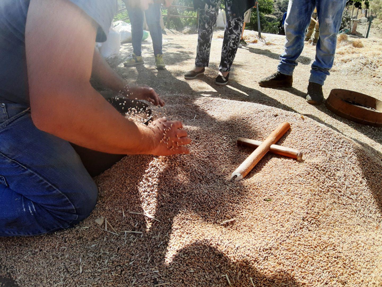 croce benedizione grano