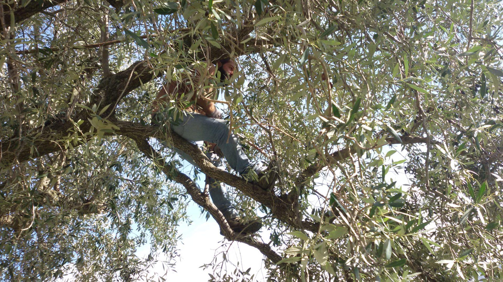 La raccolta… del tempo (riflessioni durante la raccolta delle olive)