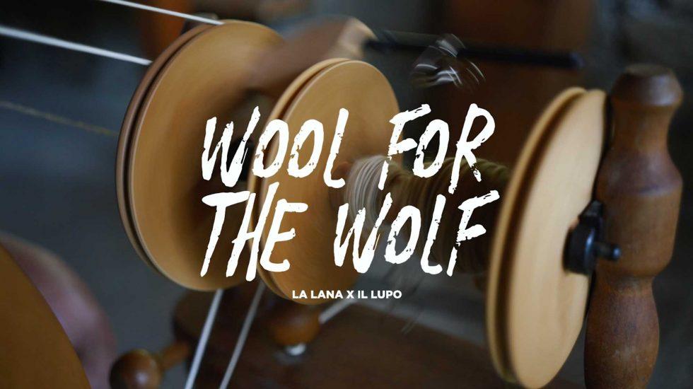Pecore e Lupi, a Parma una convivenza che passa per il progetto 'Wool for the Wolf (la lana per il Lupo)'