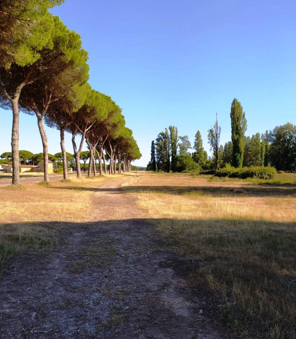 Emozioni d'Italia (6). Un respiro d'estate a San Rossore