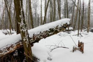 Losinij Ostrov - bosco lasciato al naturale, ma queste scritte?