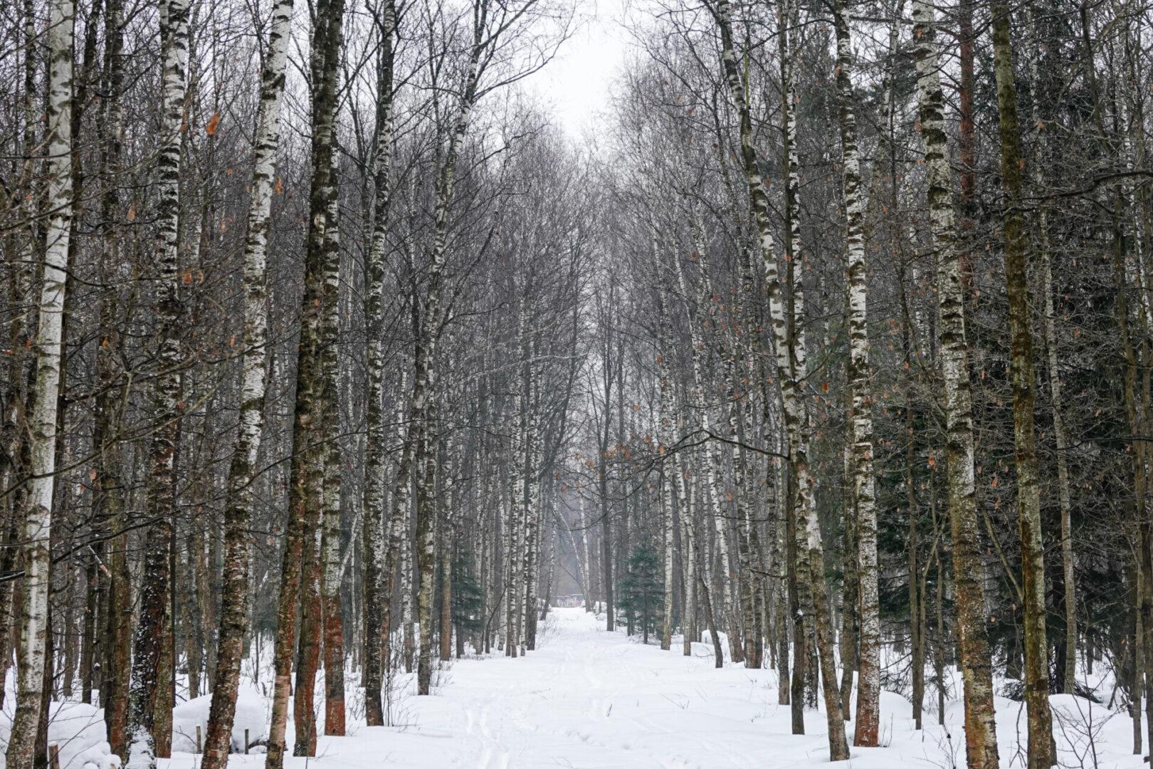 Urban Hiking: una passeggiata a Mosca nel parco nazionale di Losinij Ostrov, l'isola degli alci